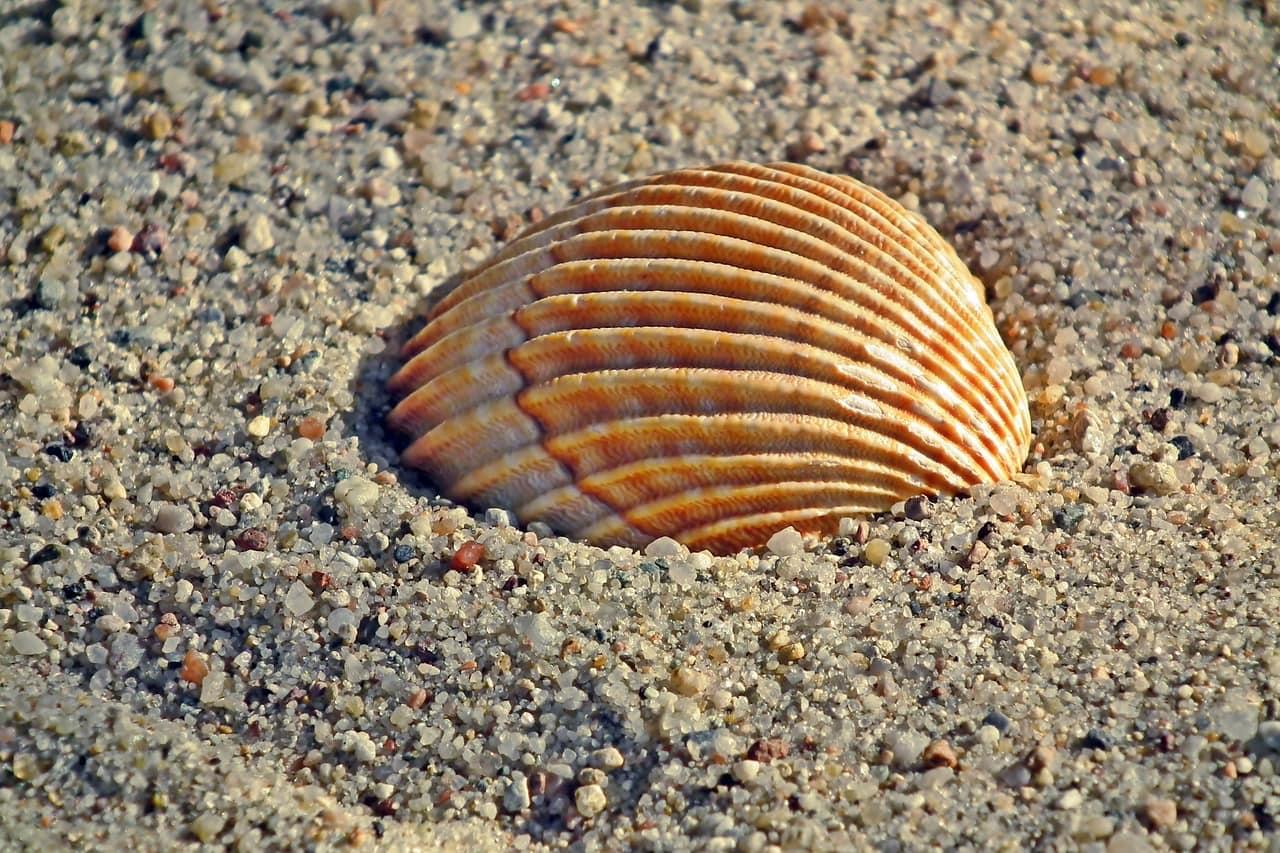 「クラムシェル」とは貝殻のこと